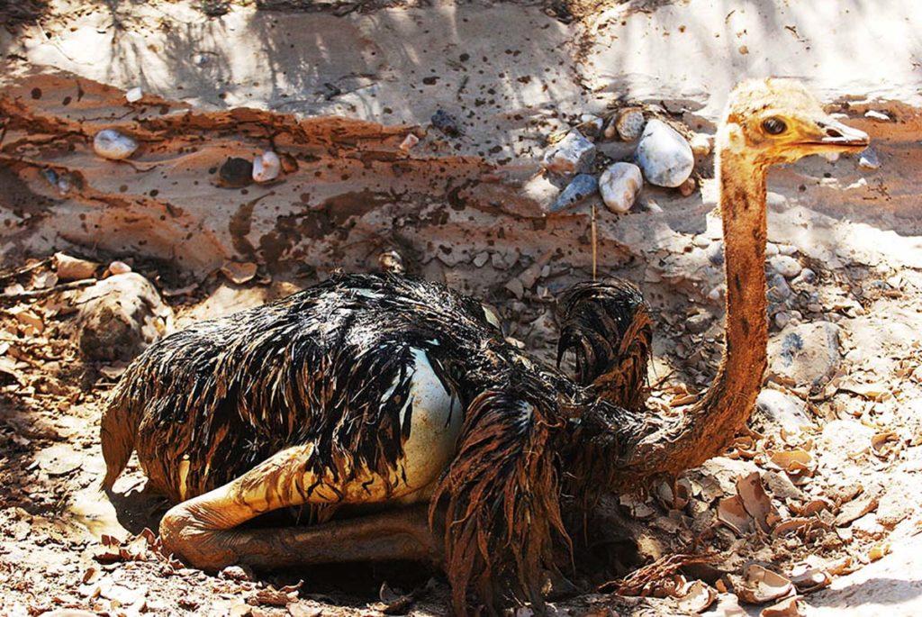namibie-skeleton-coast-struisvogeljong-zandput