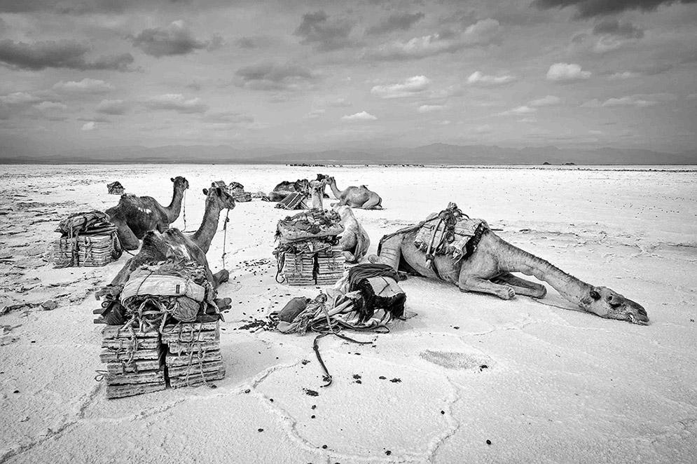 ethiopië-lake-asale-afar-kamelen