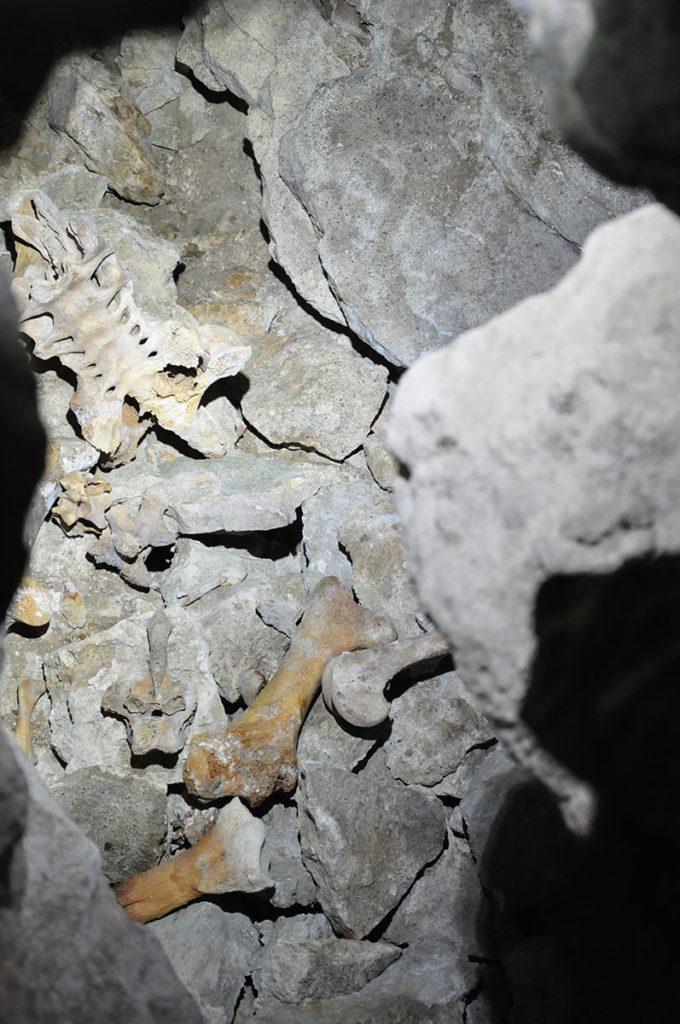 nieuw-zeeland-honeycombnieuw-zeeland-honeycombnieuw-zeeland-honeycomb-cave-botten-reuzenvogels