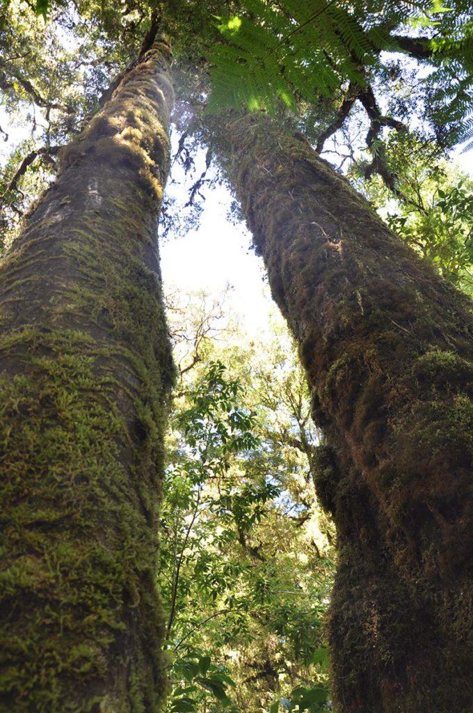 nieuw-zeeland-honeycomb-oparara-basin-bomen