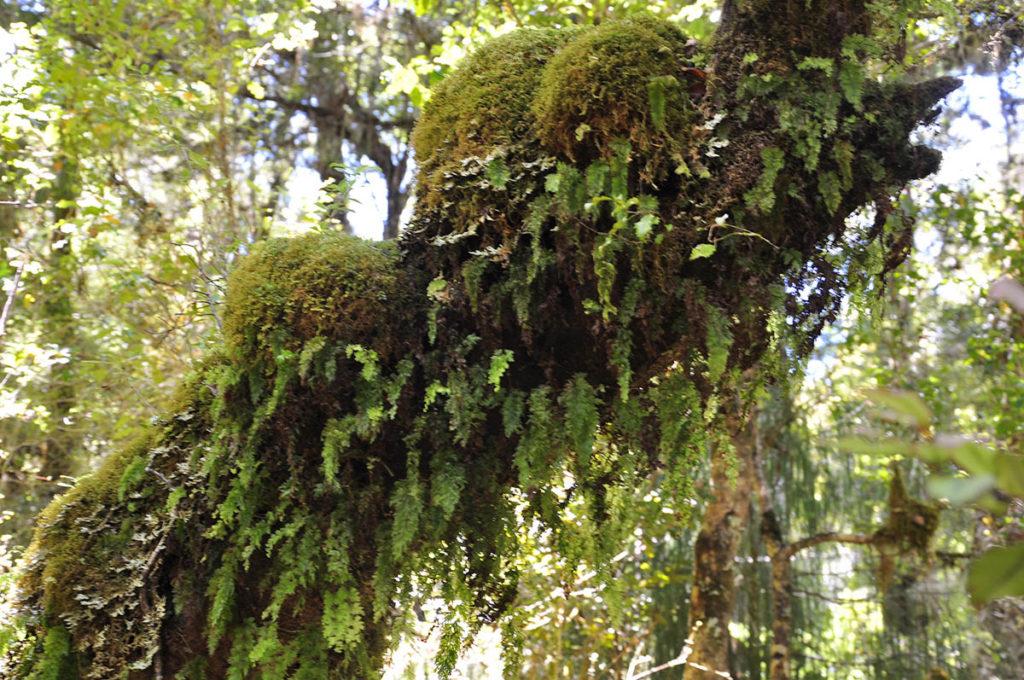 nieuw-zeeland-honeycomb-oparara-basin-mos-bomen