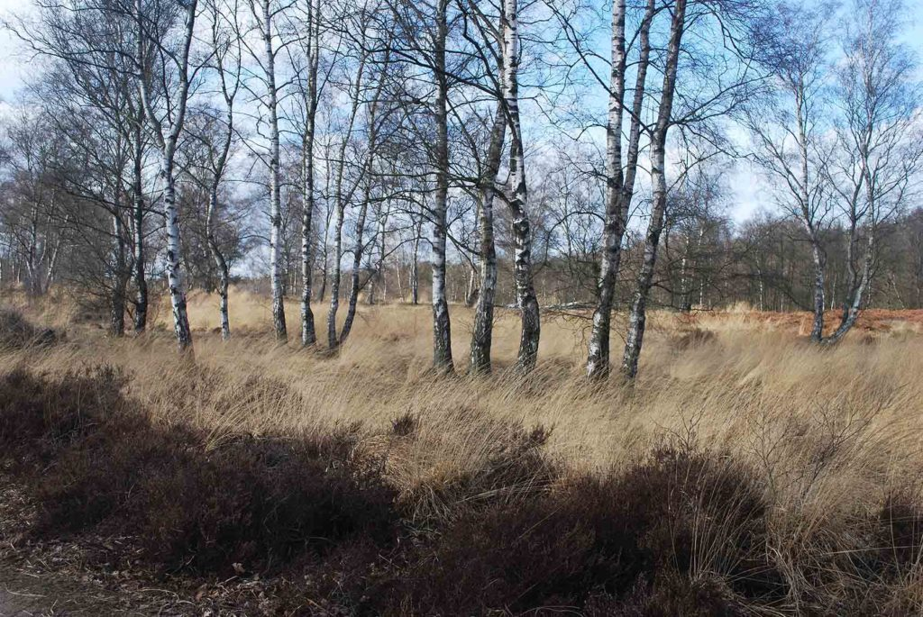 buitenleven-limburg-leudalbos-wandeling