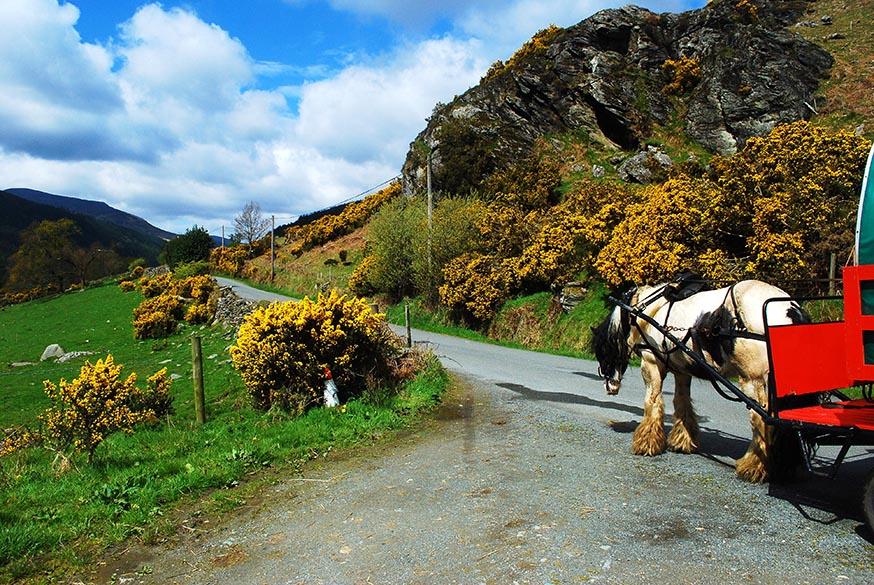 ierland-county-wicklow-huifkar-buster-opweg