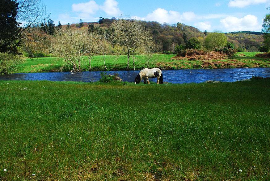 ierland-county-wicklow-huifkar-buster-wei