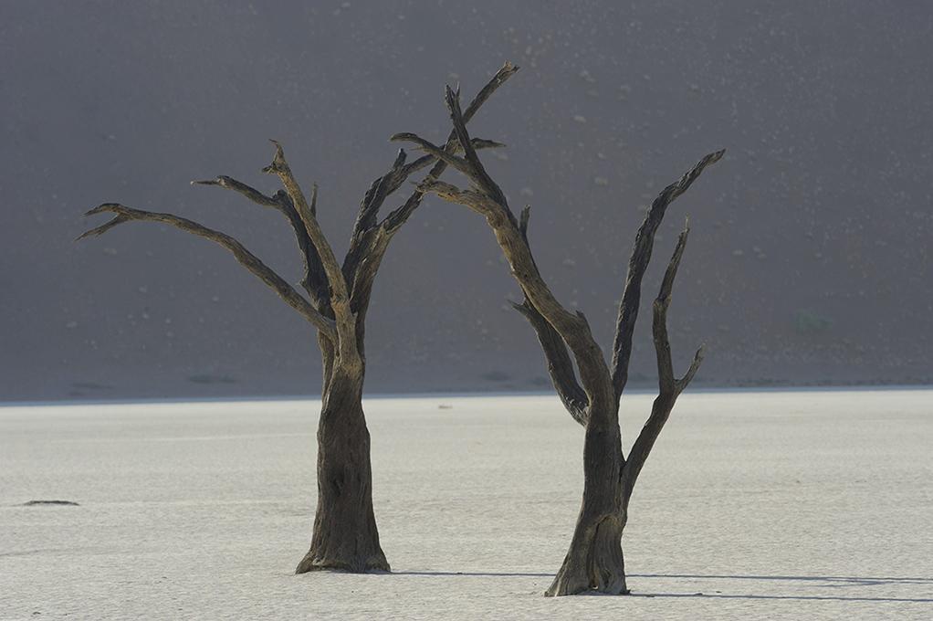 namibië-deadvlei-zoutpan-acaciabomen