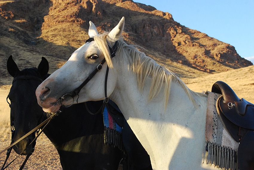 namibië-naukluft-dessert-homestead-paarden