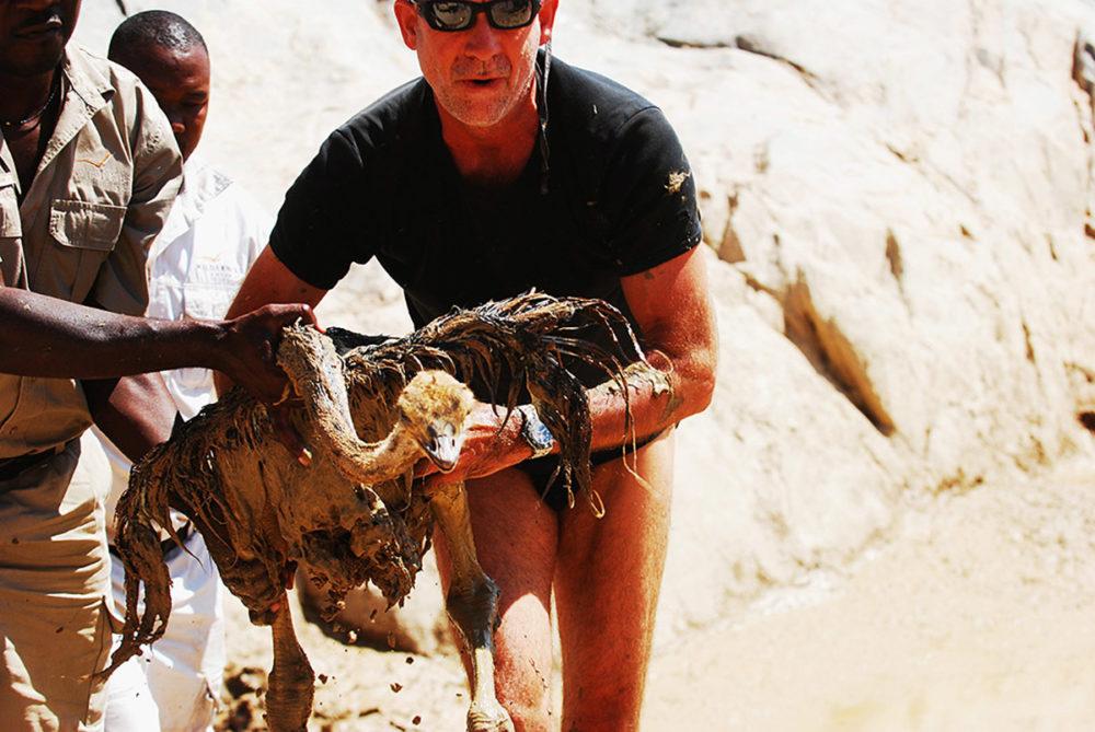 namibië-skeleton-coast-struisvogel-jong-gered