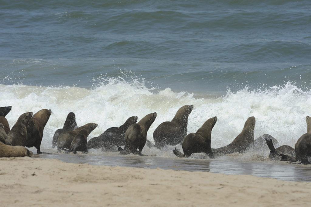 namibië-skeletoncoast-zeeleeuwen