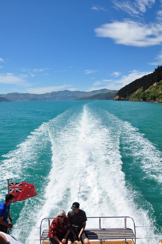 nieuw-zeeland-banks-peninsula-akaroa-dolphins