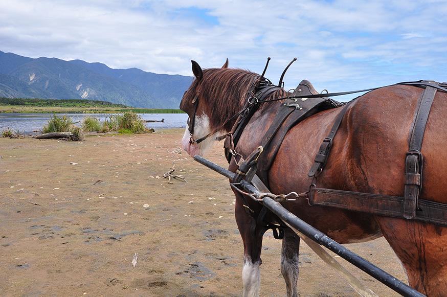 nieuw-zeeland-paardrijden-murphy-kust
