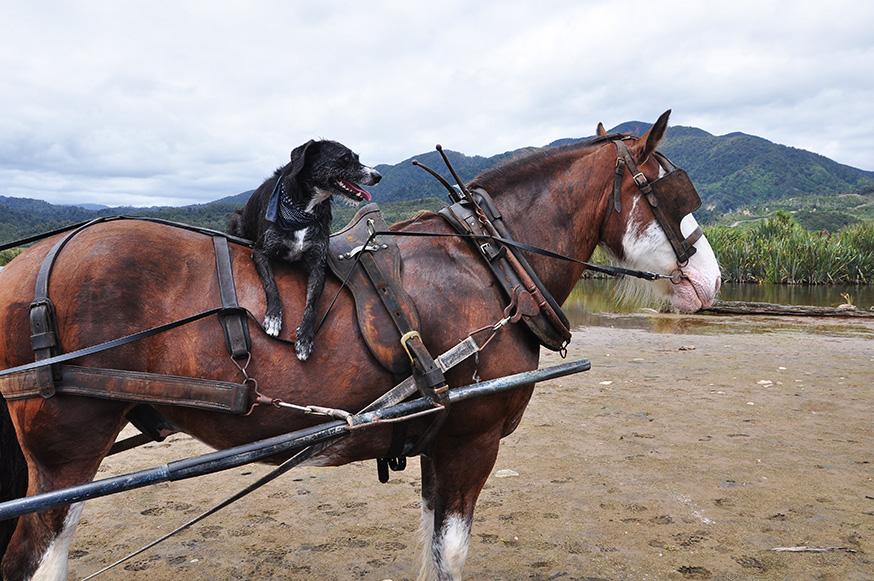 nieuw-zeeland-paardrijden-murphy-pearl