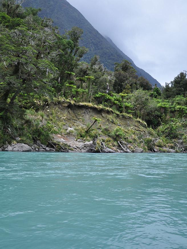 nieuw-zeeland-waiatoto-river-safari-oever-regenwoud