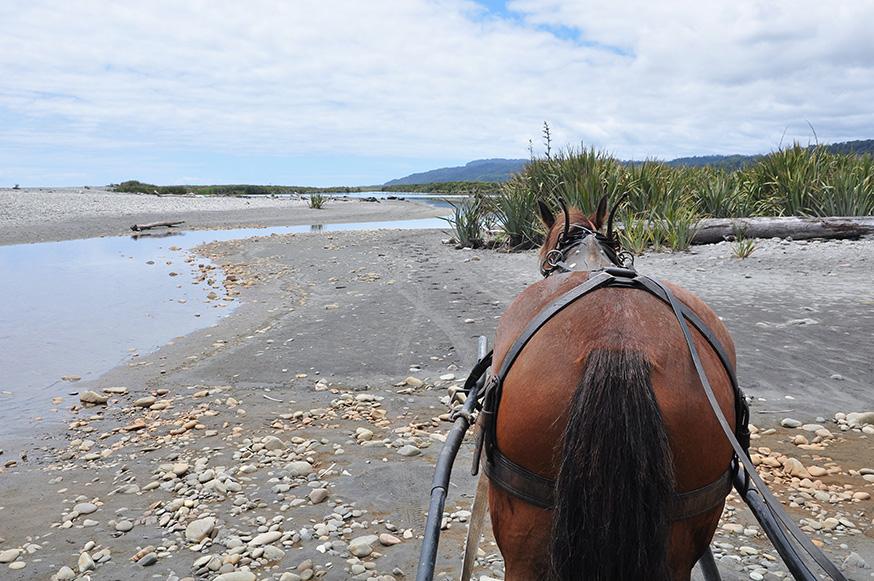 nieuw-zeeland-westkust-murphy-clydesdale-paard