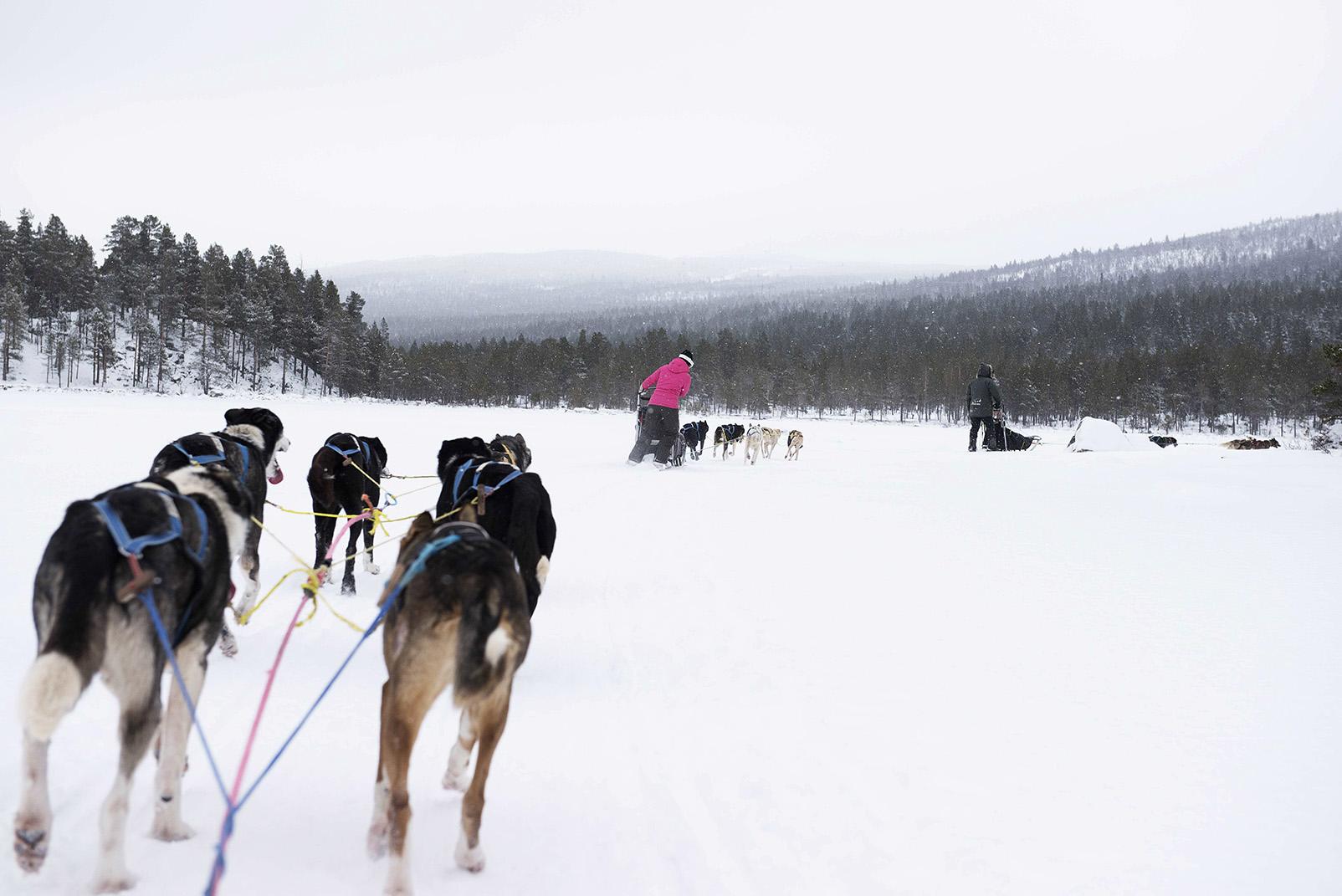 noorwegen-geilo-husky's-onderweg