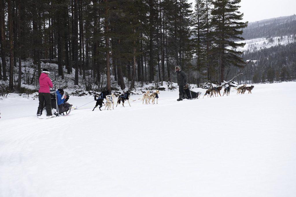 noorwegen-geilo-husky's-tour
