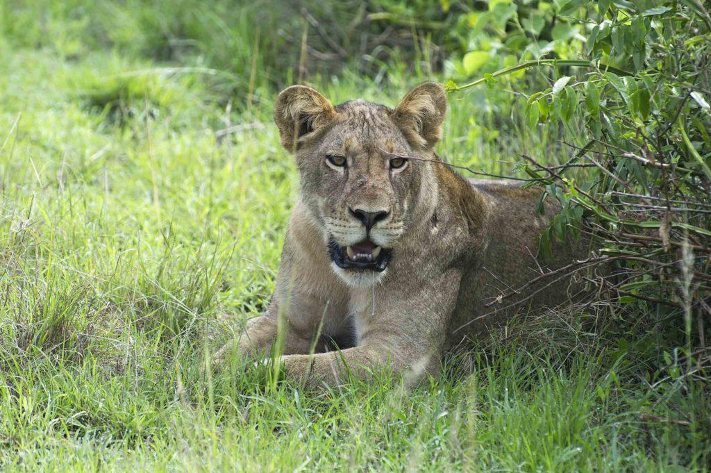oeganda-queen-elizabeth-park-leeuwin