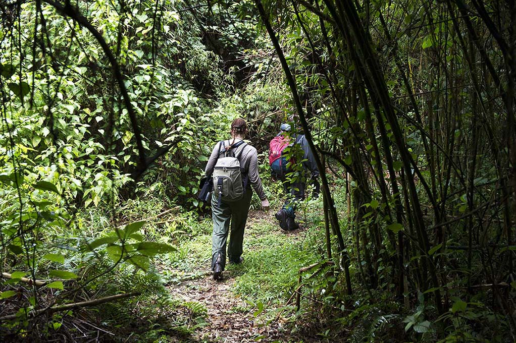 oeganda-rwenzori-wandeling