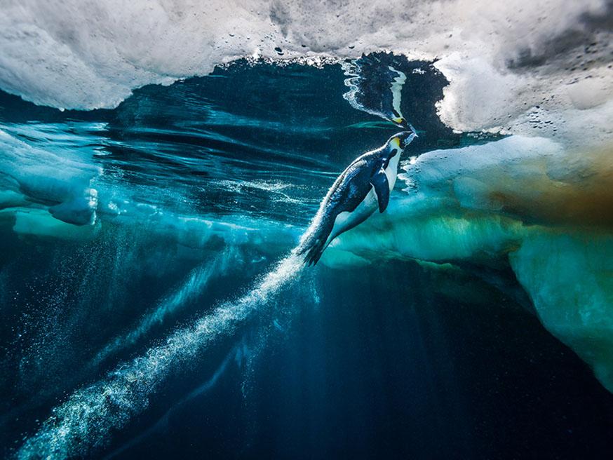 teneus-pinguïns-antartica