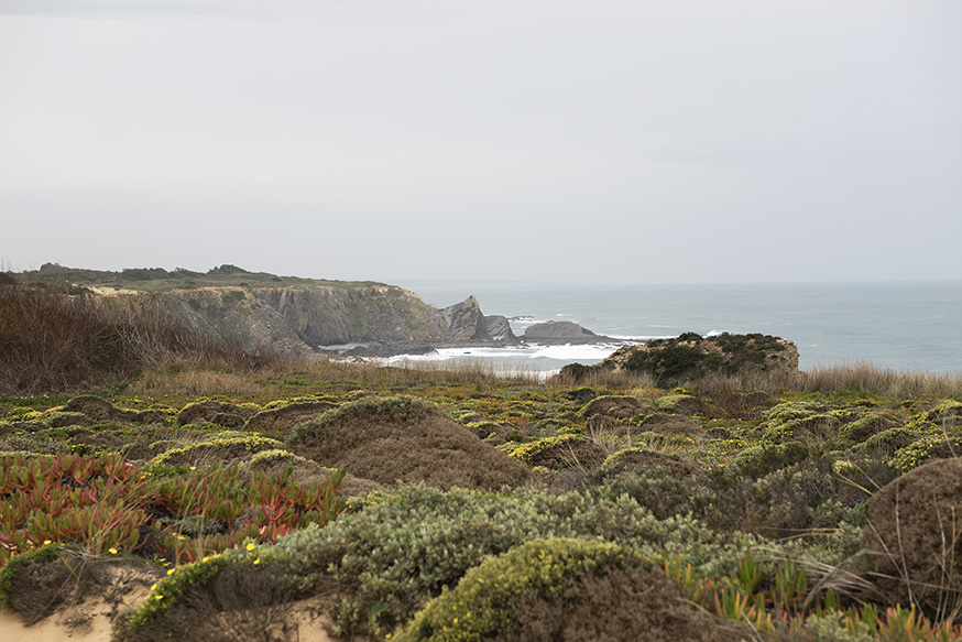 portugal-algarve-zambujeira-vissersroute-fauna-kust