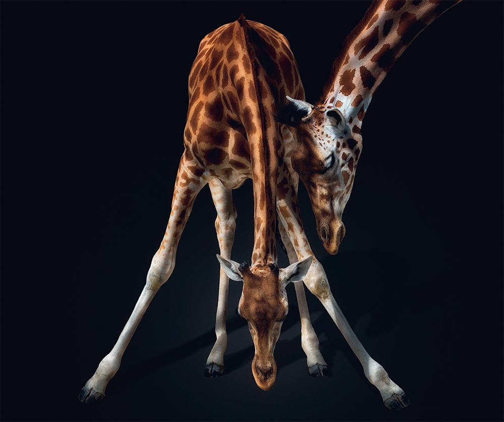 fragile-teneues-pedro-jarque-krebs-giraffe
