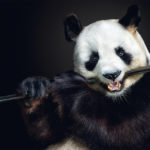 fragile-teneues-pedro-jarque-krebs-panda