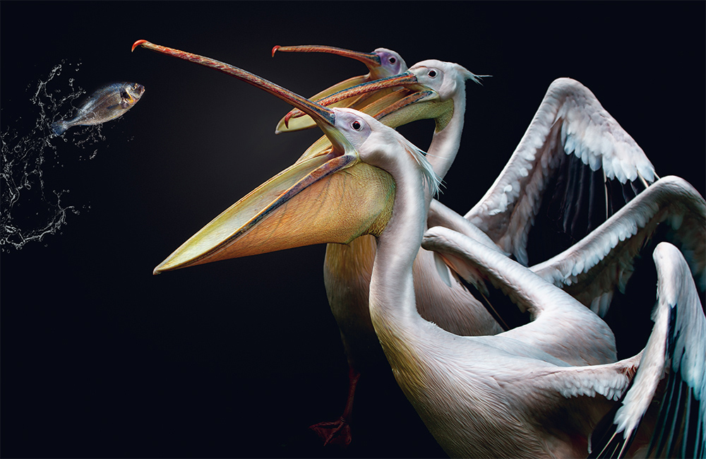 fragile-teneues-pedro-jarque-krebs-pelikanen