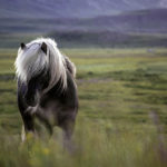 horses-of-iceland-teneues-guadalupe-laiz-for-alamendra