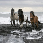 horses-of-iceland-teneues-guadalupe-laiz-glacier-lagoon