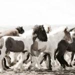 horses-of-iceland-teneues-guadalupe-laiz-the-future