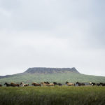 horses-of-iceland-teneues-guadalupe-laiz-volcanoes