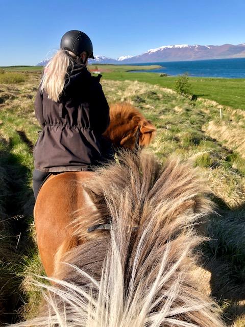 ijsland-paardrijden