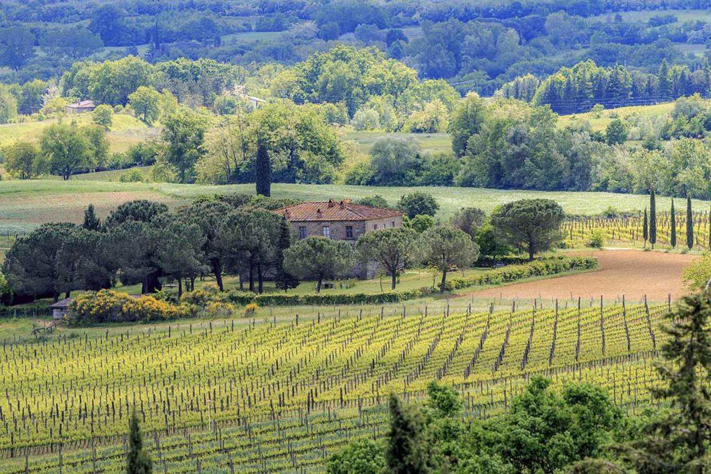 Fattoria La Vialla Spring 2016 Italie