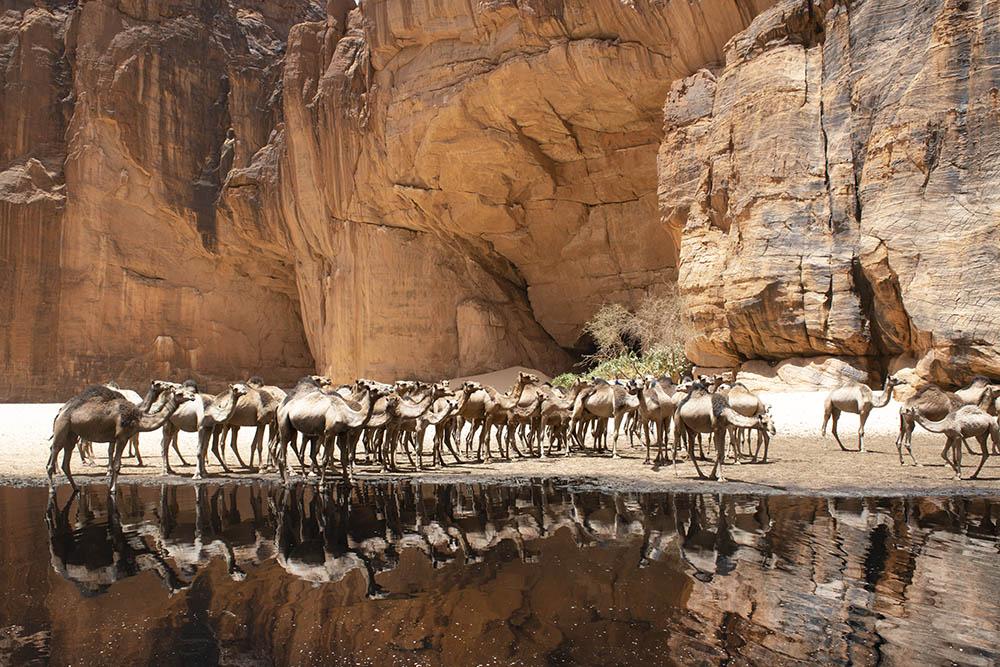 tsjaad-kamelen-ennedi
