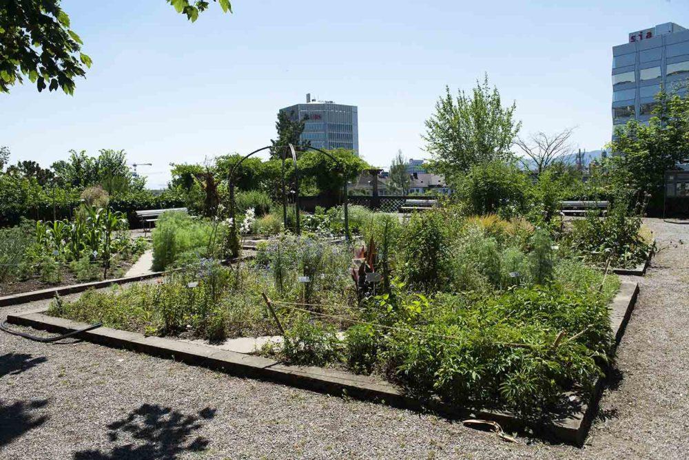 zurich-botanische-tuin