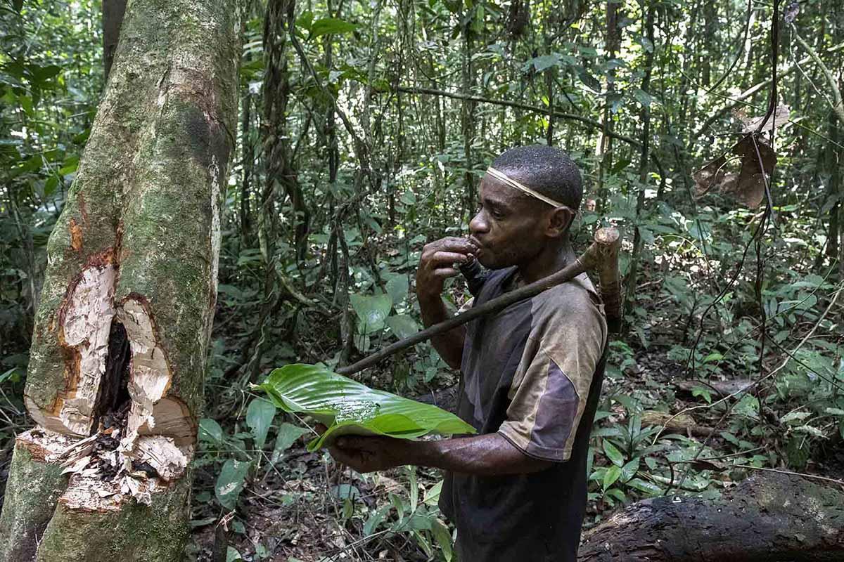 kameroen-baka-pygmeeën-tribes-man-eet-honing