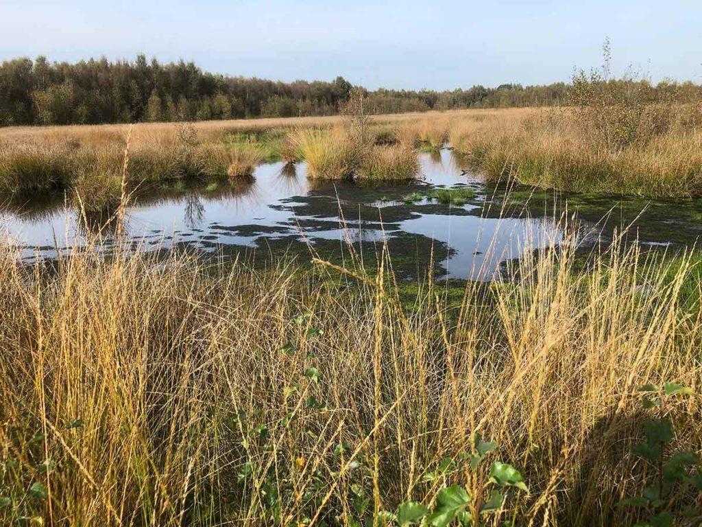 bargerveen-natuurpark moor-meerstalblok-moeras-drenthe