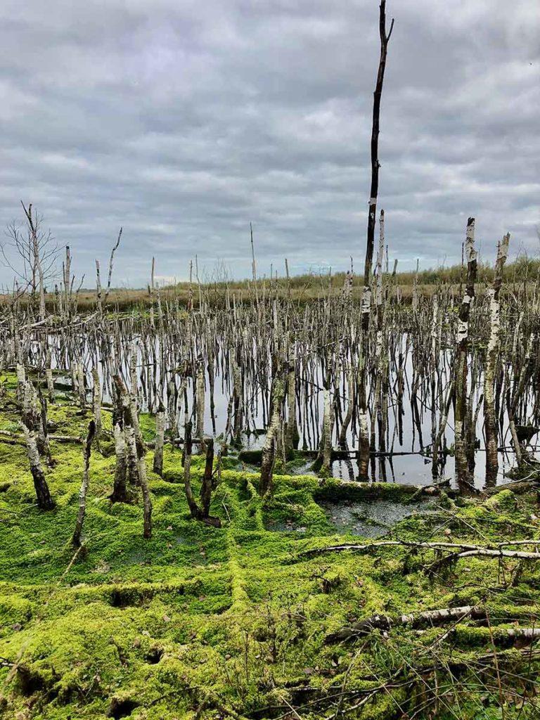 bargerveen-natuurpark moor-meerstalblok-veenmoeras-dode-bomen-drenthe