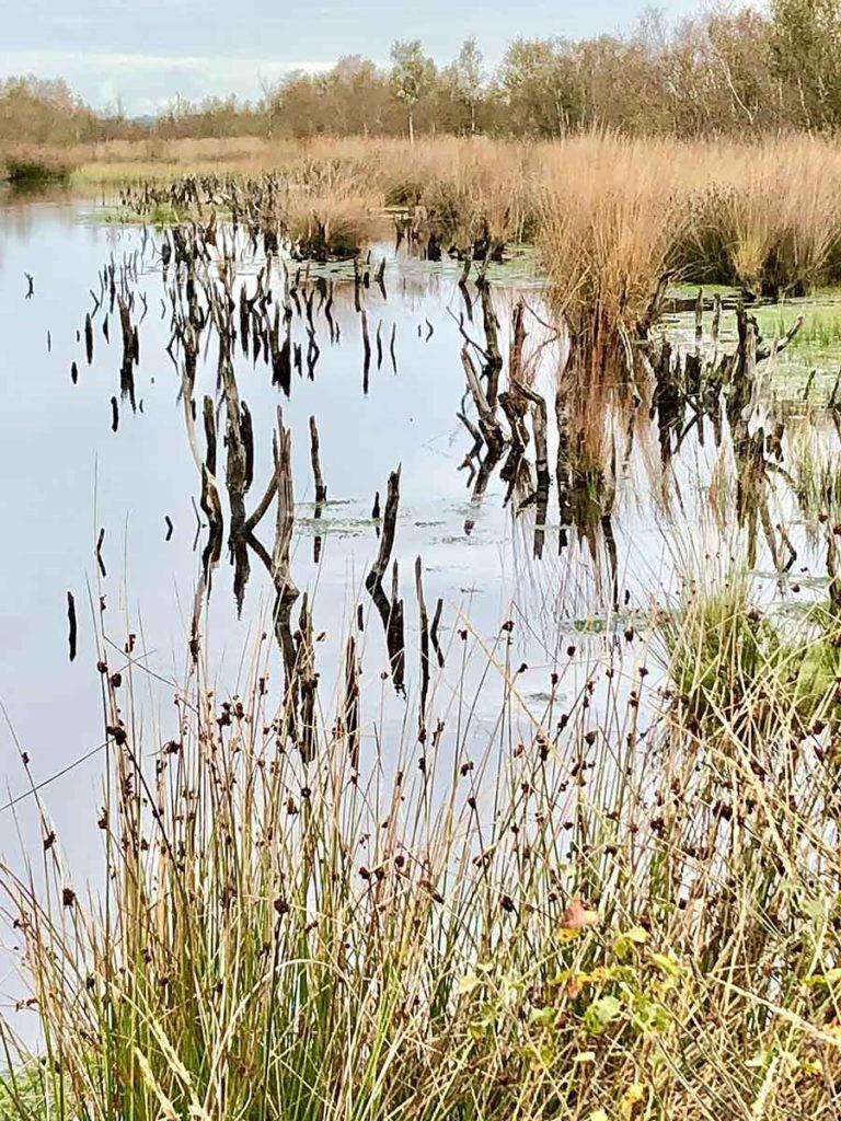 bargerveen-natuurpark moor-meerstalblok-veenmoeras-drenthe