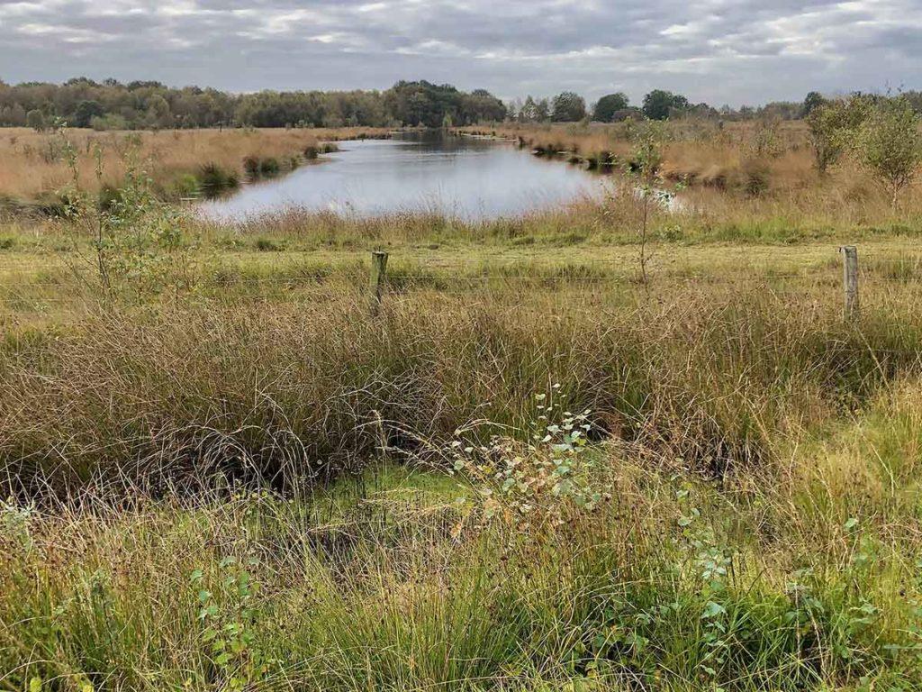 bargerveen-natuurpark moor-meerstalblok-water en moeras