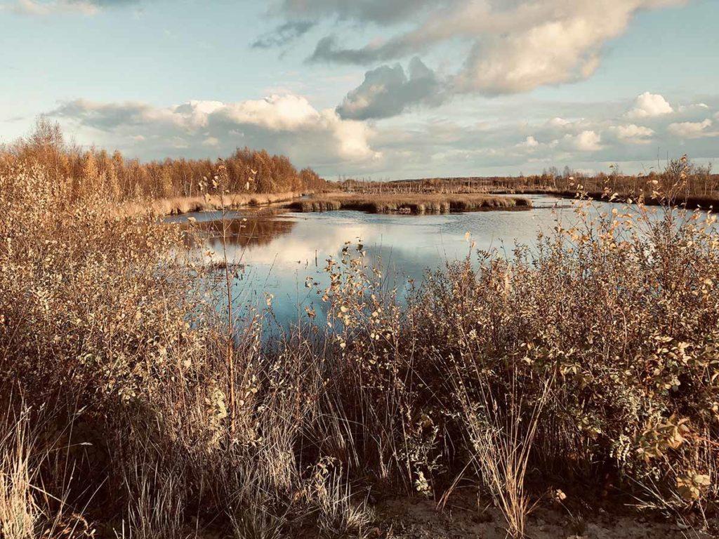 bargerveen-noord-waterbekkens-natuurpark- moor-drenthe