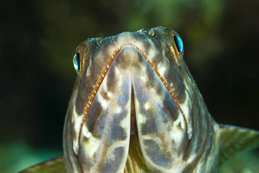bonaire-close-up -zeeschildpad-dos-winkel