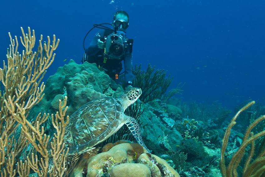bonaire-duiken-zeeschildpad-dos-winkel