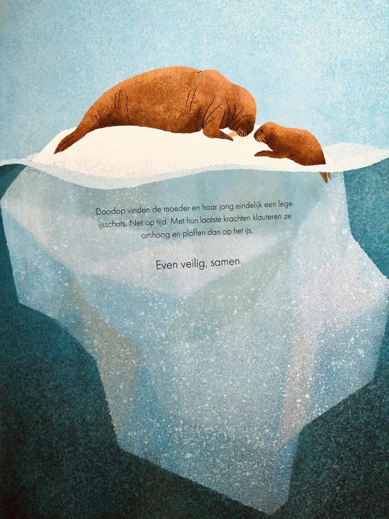 walrus-blauwe-planeet-bbc-prentenboek