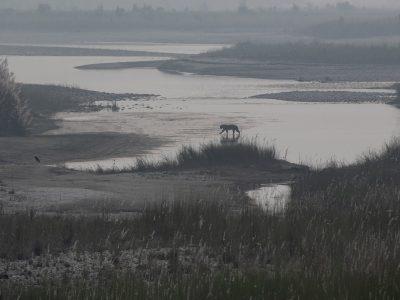 nepal-bardia-tijger-rivier