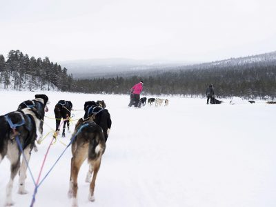 norway-geilo-huskies-on-the-way